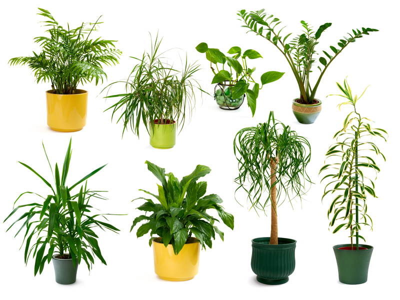 Luftreinigende pflanzen goodbetterhealthy for Plantas decorativas para interiores